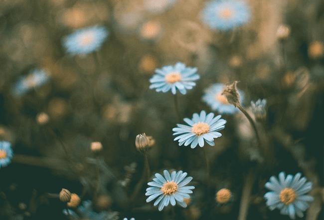 FLRD-flowers-650x441